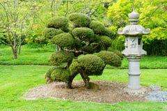 Japanese stone lamp and bonsai Royalty Free Stock Image