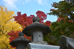 Japanese Stone Lanterns with Colourful Maple Trees. Path to Japanese temple lined with stone lanterns and colourful fall maple trees Stock Image