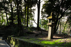 Japanese stone lanterns. With green moss in a temple with forest background Royalty Free Stock Images