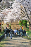 Japanese students with japan cheery blosoom. Japanese high school students in their uniform walking to Pagoda among cheery blossom Stock Photos