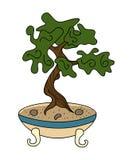Japanese style bonsai Stock Images