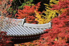 japanese style building with autumn Royalty Free Stock Images