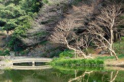Japanese style garden Royalty Free Stock Image