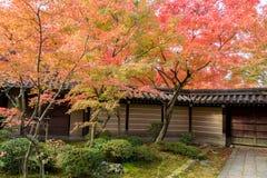 Japanese style garden in autumn Stock Image