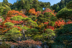 Japanese style garden in autumn Stock Photography