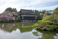 Japanese-style garden in Heian Shrine. Japanese-style garden with cherry blossom in Heian Shrine Stock Photography