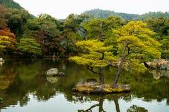 Japanese style garden tree reflect pond Royalty Free Stock Photo