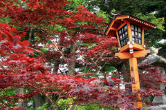 Japanese Style Lamp during Autumn Season. With Colorful Leaves Stock Photo