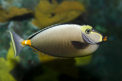 Japanese tang Royalty Free Stock Photo