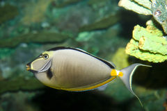 Japanese tang Stock Photos