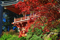 Japanese Tea Garden in San Francisco Royalty Free Stock Photo