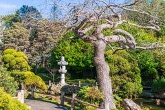 Japanese Tea Garden. In San Francisco royalty free stock images