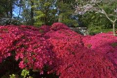 Japanese Tea Garden - San Francisco stock images