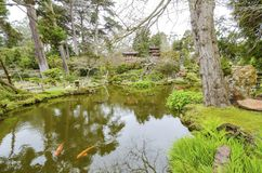 Japanese Tea Garden, San Francisco. The Japanese Tea Garden in Golden Gate Park in San Francisco, California, United States of America. A view of the native Royalty Free Stock Photos