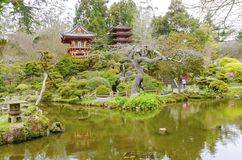 Japanese Tea Garden, San Francisco. The Japanese Tea Garden in Golden Gate Park in San Francisco, California, United States of America. A view of the native stock image