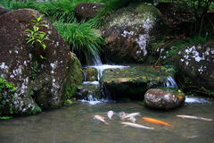 Japanese Tea Garden - Waterfall and Koi Fish Stock Image