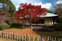 Japanese tea house. Autumn view on japanese tea house and garden royalty free stock images