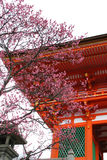 Japanese Temple Blossom. Famous Kiyomizu japanese temple in Kyoto shot against a blossom tree Royalty Free Stock Image