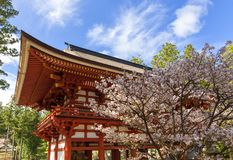 Japanese temple with blossom Stock Image