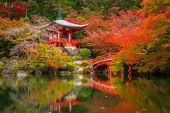 Japanese temple with colorful maple trees. Daigo-ji temple with colorful maple trees in autumn, Kyoto, Japan Stock Photos