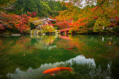 Japanese temple with colorful maple trees. Daigo-ji temple with colorful maple trees in autumn, Kyoto, Japan Royalty Free Stock Images