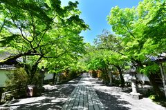 Japanese temple with fresh green royalty free stock images