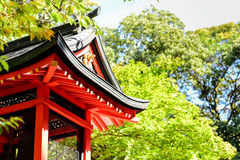 Japanese temple among the green maple trees. Red Japanese temple among the green maple trees Stock Image
