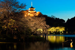 Japanese Temple and Japanese Gardens nightscape Stock Photos