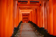 Japanese temple path Stock Images