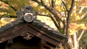Japanese Temple roof in autumn in Japan. Showing trees in the background stock video footage
