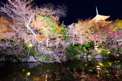 Japanese temple with sakura Royalty Free Stock Images