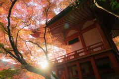 Japanese temple sun flare in autumn Royalty Free Stock Images