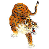 Japanese tiger. I painted a Japanese tiger in a freehand drawing Royalty Free Stock Photos
