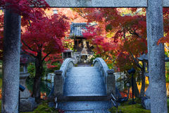 Japanese torii gate over a bridge to a pond island with a prayer shrine and red fall maple trees Royalty Free Stock Images