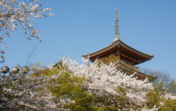 Japanese Tower And Cherry Flowers Royalty Free Stock Photography