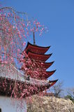 Japanese traditional architecture, sakura, pagoda Stock Photos