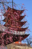 Japanese traditional architecture, sakura, pagoda Royalty Free Stock Photography