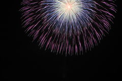 Japanese traditional fireworks in the night sky Royalty Free Stock Photography