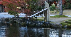 Japanese traditional garden at the park in autumn in Shizuoka Japan stock footage