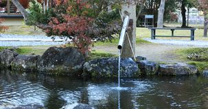 Japanese traditional garden at the park in autumn in Shizuoka Japan stock video