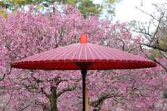 Japanese traditional red umbrella Royalty Free Stock Photos