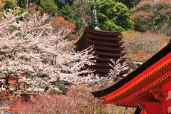 Japanese traditional temple and cherry blossom Stock Photography