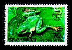 Japanese Tree Frog (Hyla japonica), serie, circa 1992. MOSCOW, RUSSIA - NOVEMBER 25, 2017: A stamp printed in Democratic People's republic of Stock Image