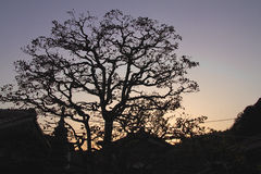 Japanese Tree Silhouette. The silhouette of one tree in Japan stock photo