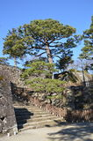 Japanese tree and steps. An old Japanese tree. Photo taken Dec 2014 Stock Images