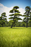 Japanese trees and sky Royalty Free Stock Images