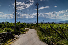 A Japanese Vineyard in Yamanashi With a Small Country Road. A grape vineyard in Yamanashi, Japan. With the blue skies and mountains in the background Stock Photos