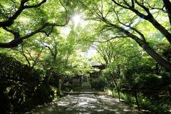 Japanese walkway in green Garden trees. Japanese walkway in green Garden royalty free stock image