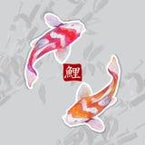 Japanese watercolor carps koi swimming Royalty Free Stock Photos