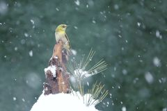 Bird in snow stock images